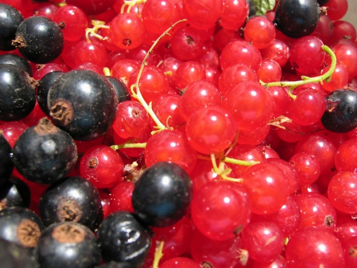Red and blackcurrants